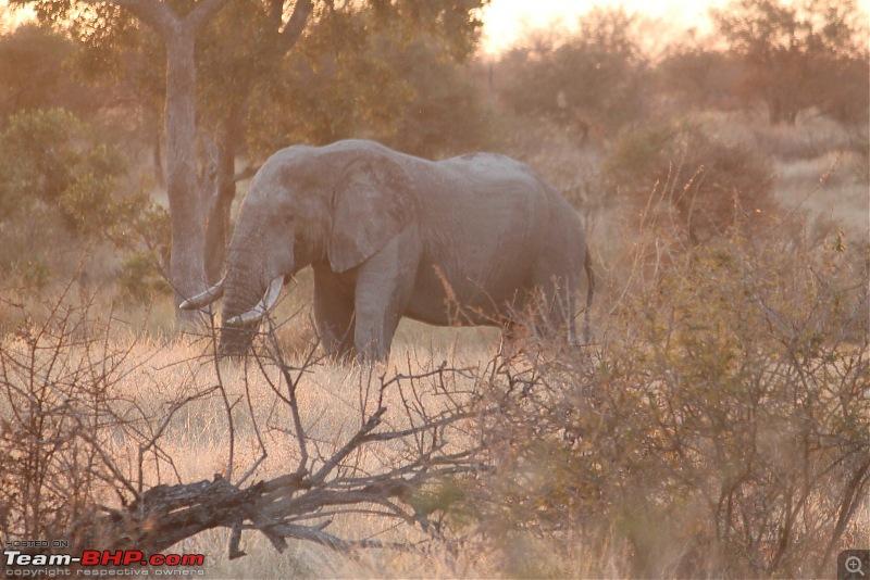 Splendid South Africa-kruger-elephant-8.jpg