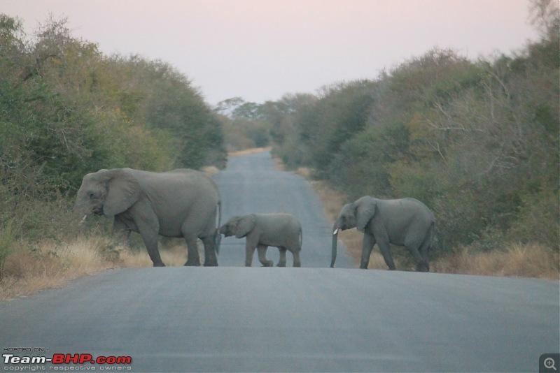 Splendid South Africa-kruger-elephant-5.jpg