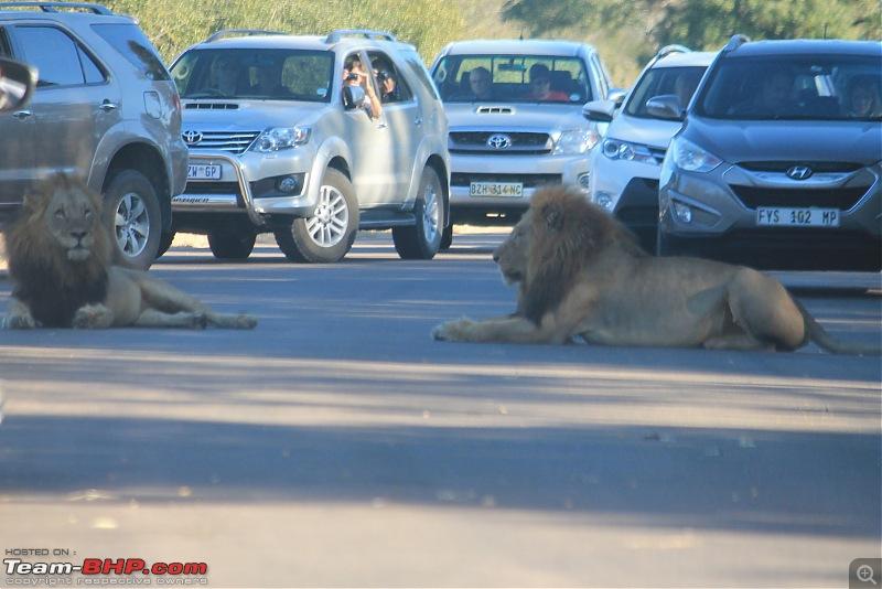 Splendid South Africa-kruger-lions-road-1.jpg