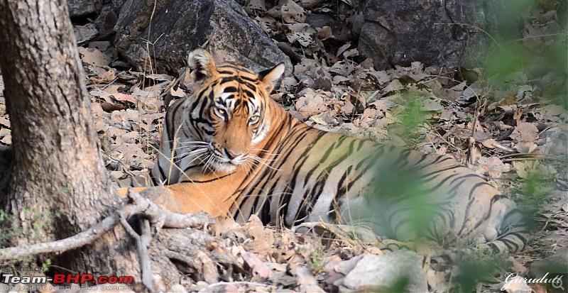 Gurgaon - Ranthambhore - Jodhpur - Gurgaon: Big Cats call again..!-0722.jpg