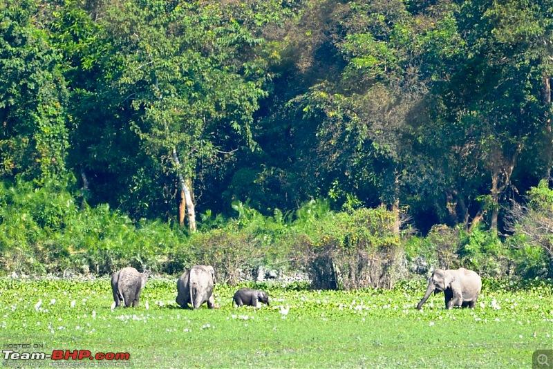 N.E.W.S. Nepal & East to West in a Safari-dsc_0163.jpg