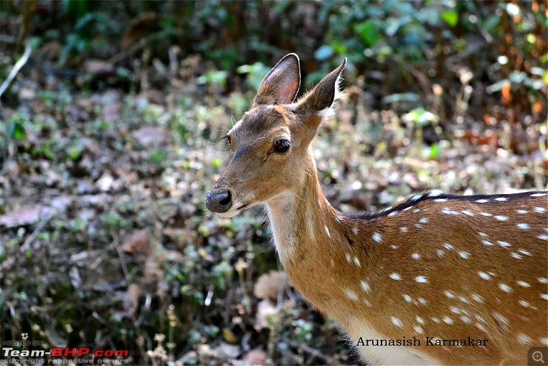 Kumaon roadtrip from Asansol (WB), via Jim Corbett National Park-dsc_0322.jpg