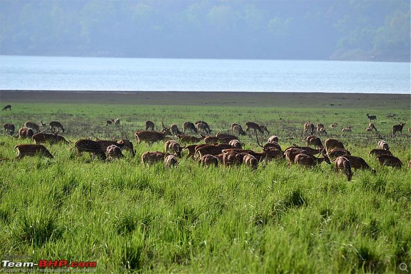 Kumaon roadtrip from Asansol (WB), via Jim Corbett National Park-dsc_0395.jpg