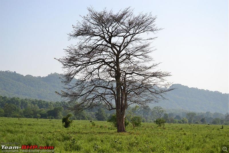 Kumaon roadtrip from Asansol (WB), via Jim Corbett National Park-dsc_0463.jpg