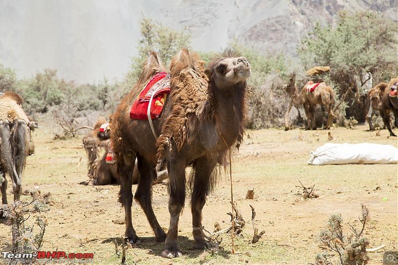 Marengo conquers the Marsimik La - The Ladakh episode-img_1383.jpg