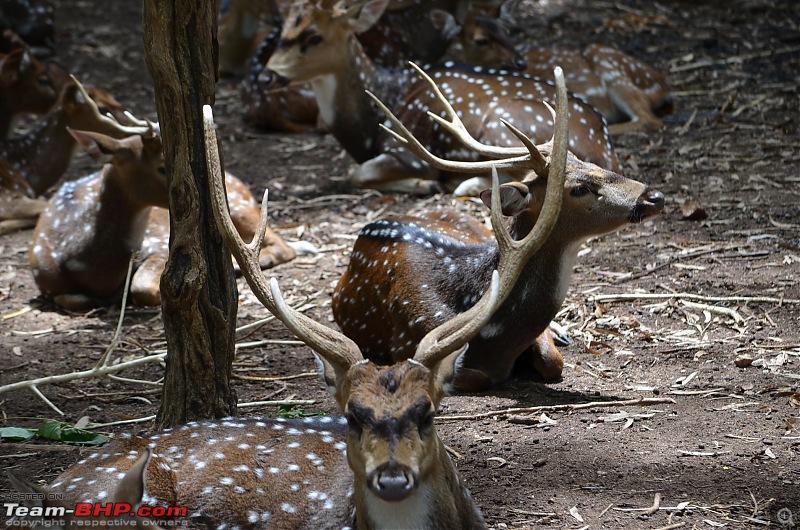 Fresh air isn't too far: Devarayanadurga, a Photologue-dsc_0223.jpg