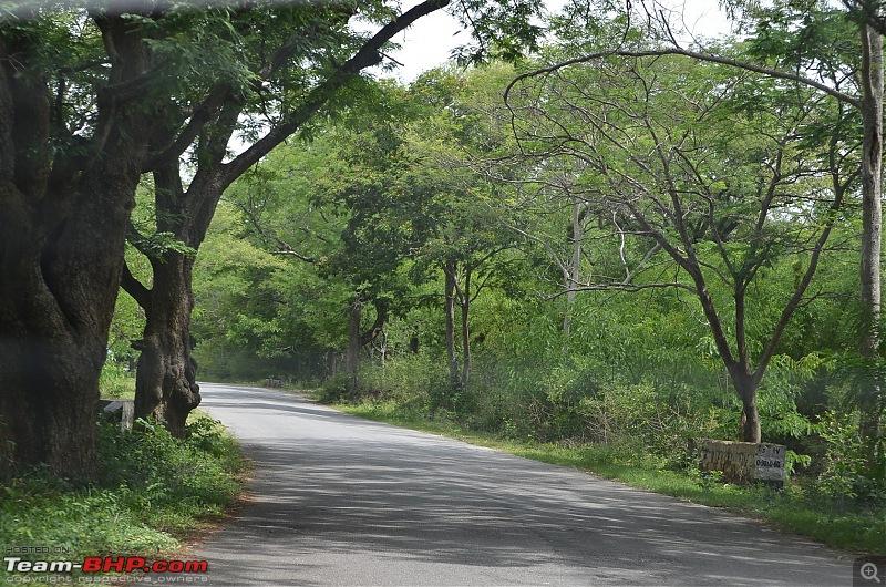 Fresh air isn't too far: Devarayanadurga, a Photologue-dsc_0262.jpg