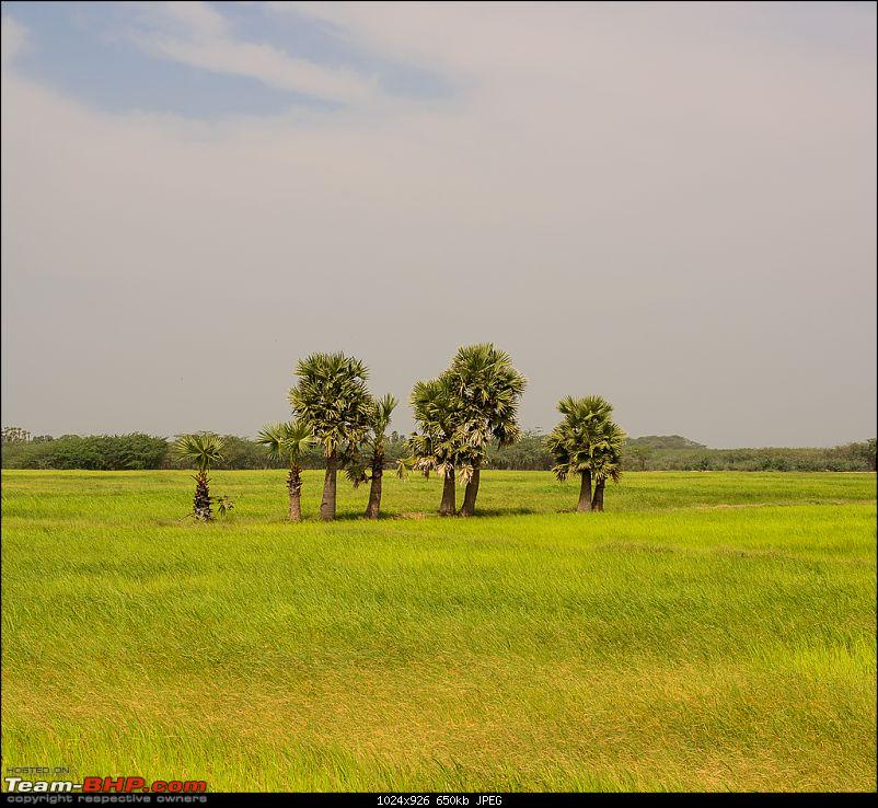 South India West-Coast Ride. And some more...-20131226dsc_1494.jpg