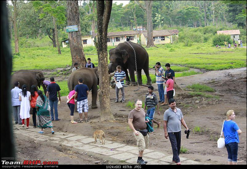 Meeting the Elephants - Family overnighter at Dubare Elephant Camp-ellecamp7.jpg