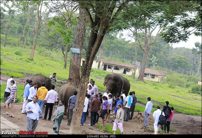Meeting the Elephants - Family overnighter at Dubare Elephant Camp-ellecamp11.jpg