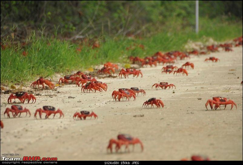 Let's know about Guadalajara! Living & working in Mexico-crabs-road.jpg