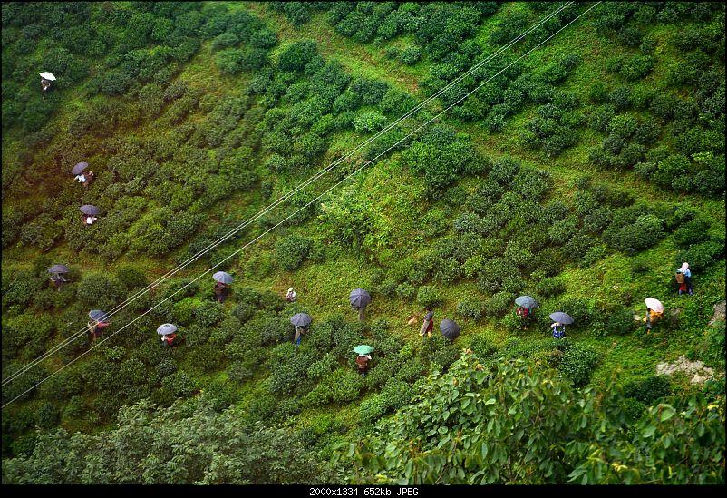 A Quick Trip to Darjeeling, Gangtok & Nathula-o.jpg