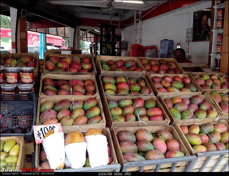 Let's know about Guadalajara! Living & working in Mexico-mangos.jpg