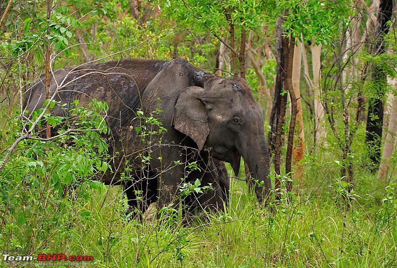 Name:  elephantcs4.jpg Views: 8249 Size:  526.4 KB