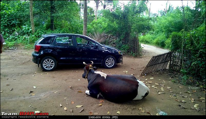 Polo GT TDI Chronicles - From Surat to God's Own Country for my Wedding!-moo.jpg