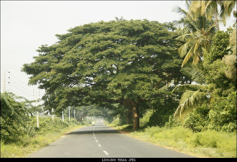 K.Gudi & B.R. Hills - A serene getaway from Bangalore-_mg_1940.jpg
