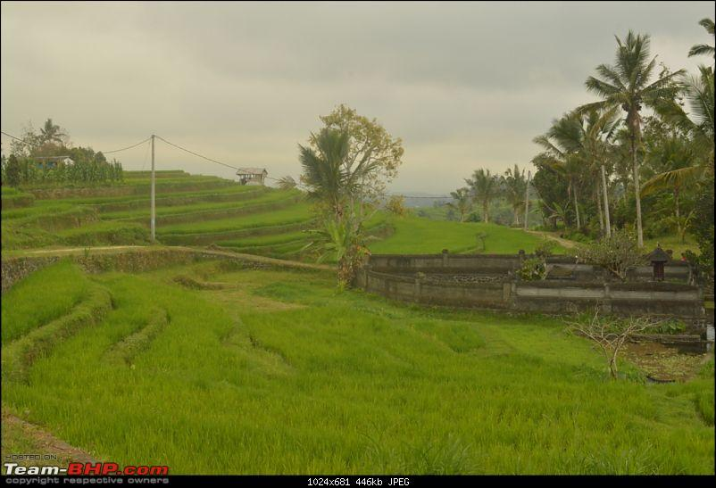 Story of the little piece of Bali in our hearts!-dsc_0144.jpg