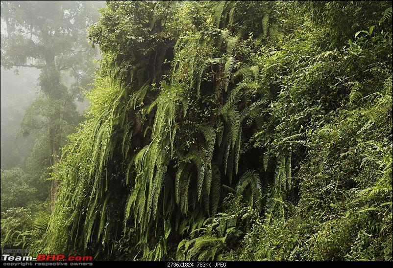 Photologue: Hills of North Bengal / Sikkim in the Monsoons - Chhayataal-img_47222.jpg