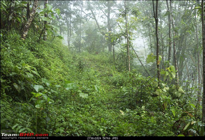 Photologue: Hills of North Bengal / Sikkim in the Monsoons - Chhayataal-img_45701.jpg