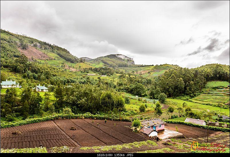 Monsoon - To the Sky Cottage, Munnar-dsc_1591.jpg