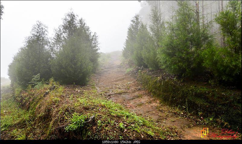 Monsoon - To the Sky Cottage, Munnar-dsc_1626.jpg
