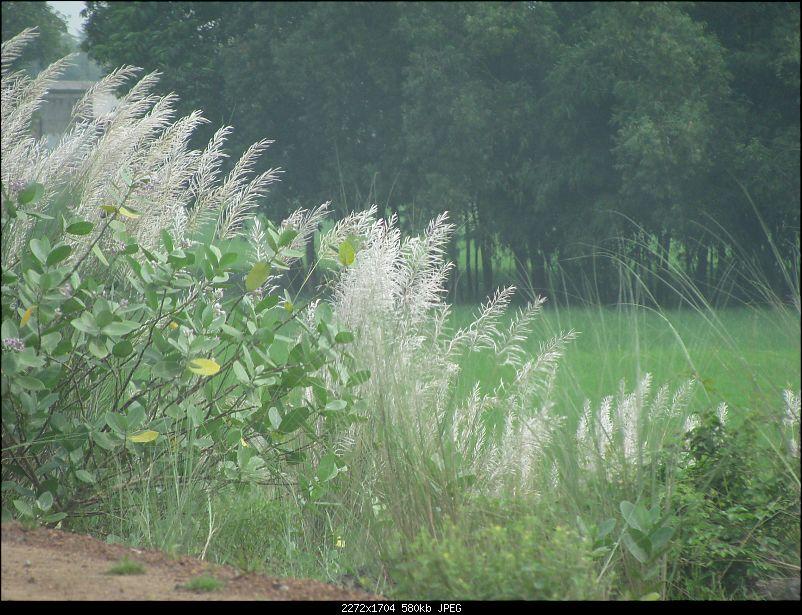 Rain, rain & even more rain...at Chandipur, Orissa-img_2461.jpg