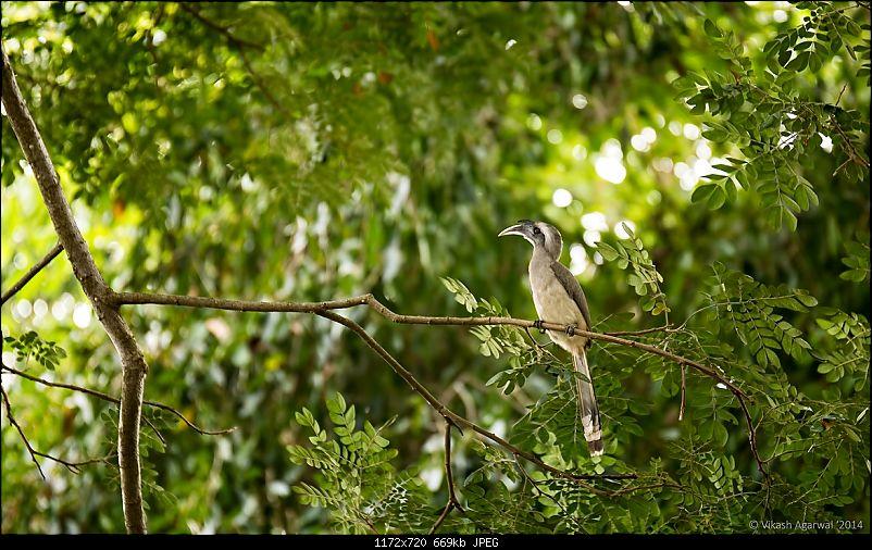 Photologue - Day trip to the Ranganathittu Bird Sanctuary!-dsc_7058.jpg