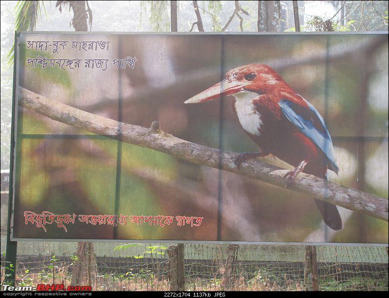 A day at the Parmadan Sanctuary, in the backyard of Bengal-img_1373.jpg