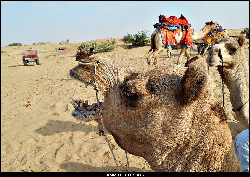 Desert Storm'd into the Thar Desert and the Little Rann of Kutch-dscn2088.jpg