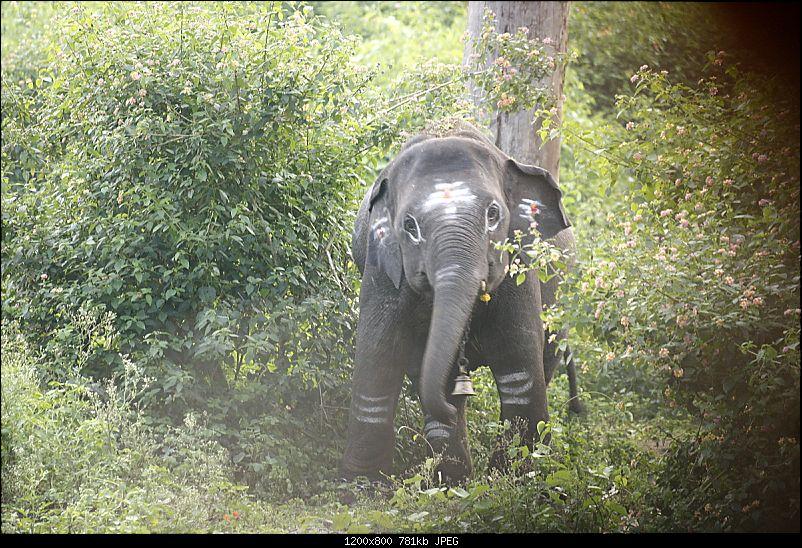 K.Gudi & B.R. Hills - A serene getaway from Bangalore-_mg_2179.jpg