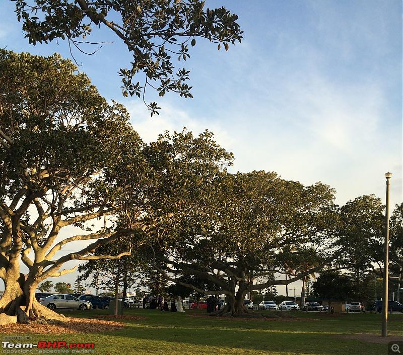 The Brisbane Chronicles EDIT : ODI @ The Gabba-img_2591.jpg
