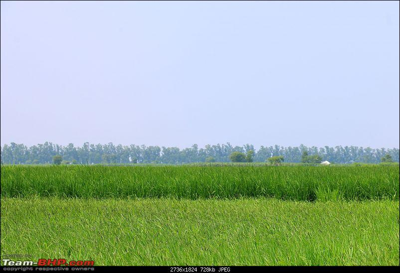The Northern Expedition - Mumbai to Ladakh-green-fields-punjab.jpg