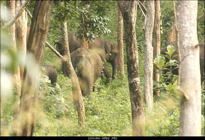 K.Gudi & B.R. Hills - A serene getaway from Bangalore-_mg_2268.jpg