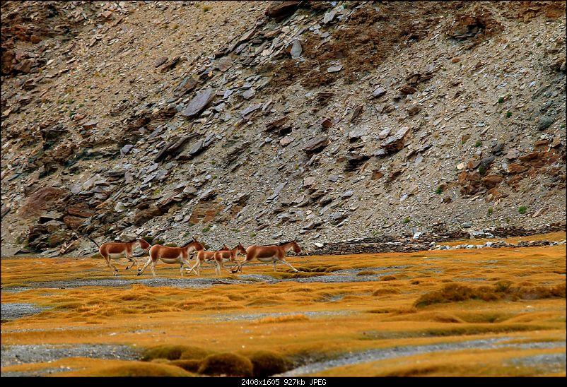The Northern Expedition - Mumbai to Ladakh-flight-kiang.jpg