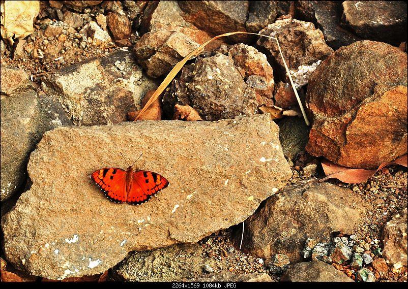 Treks around Mumbai: Karnala Bird Sanctuary & Kalavantin Durg-dsc_0064.jpg
