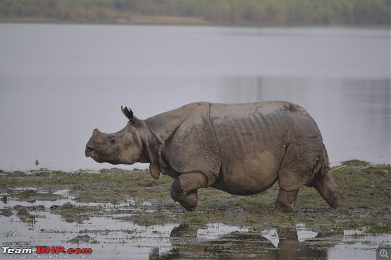 Experiencing Wildlife and Nature - Kaziranga National Park-dsc_1070.jpg