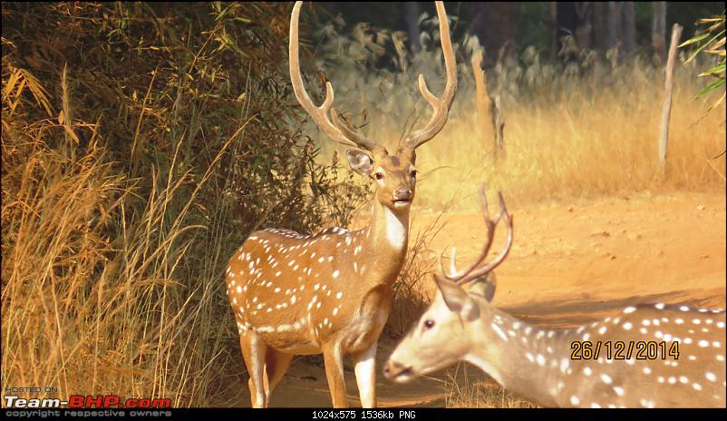 Tadoba: A Family's Winter Trip-chitalstags.png