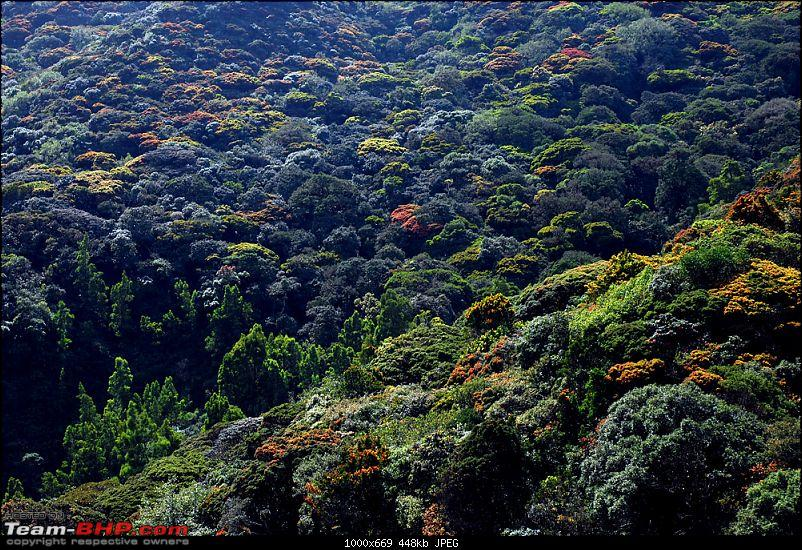 Chennai to Ooty family trip - Why not in a Thar?-cauliflowervalley.jpg