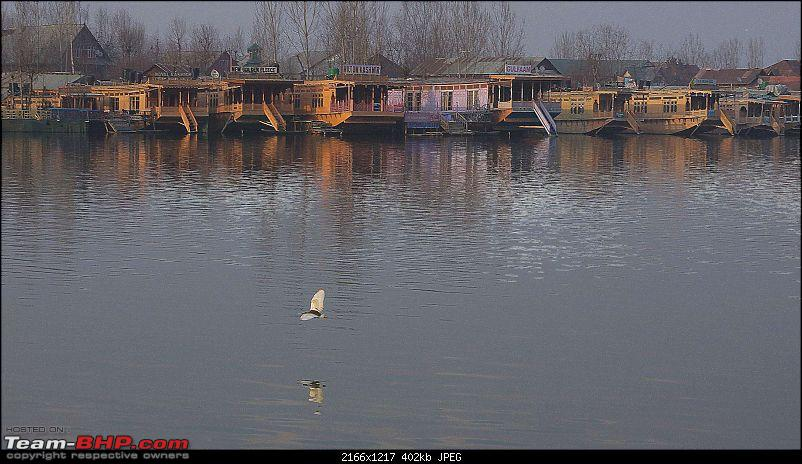 Kashmir in January: Srinagar (sans snow after floods), Gulmarg, Yousmarg & Pahalgam-dallake-2.jpg