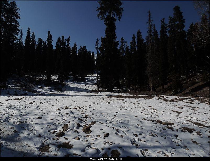 The White Album - Gulmarg, Kashmir-dscn3052.jpg