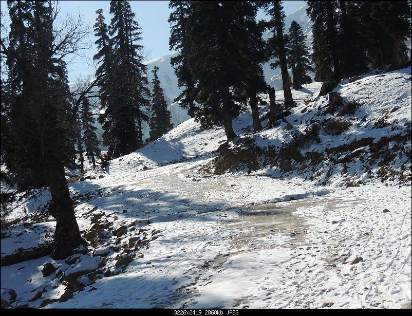 The White Album - Gulmarg, Kashmir-dscn3104.jpg