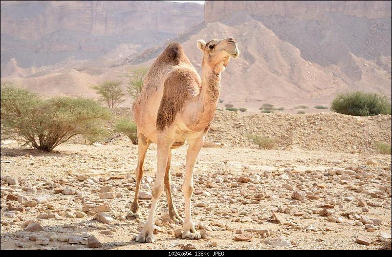 Life in the Kingdom - Riyadh-dsc_0983.jpg