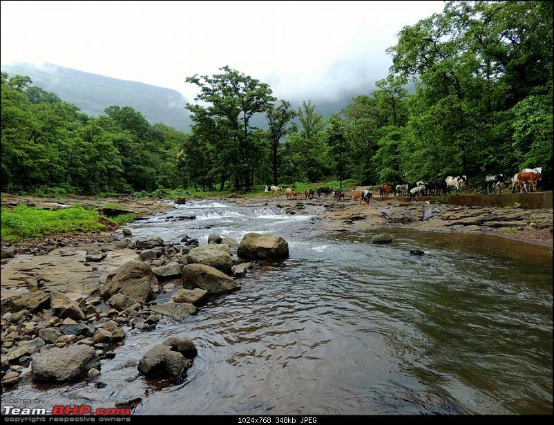 Malshej during the monsoons: One day escapade of two jobless BHPians-126.jpg