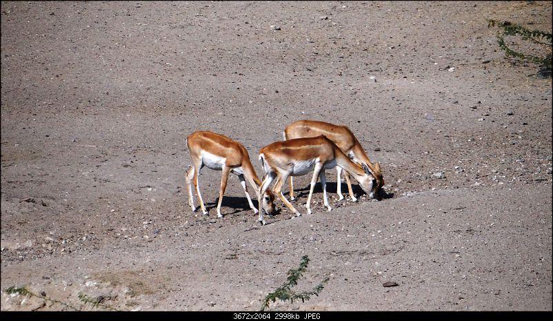 A week's drive through Rajasthan Part II - The desert wind blows over Marwar-dsc03540.jpg