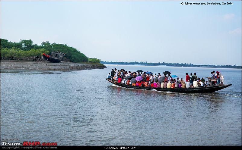 In search of the Legendary Swamp Tiger - Sundarbans Tiger Reserve-bcmt_43a3973.jpg