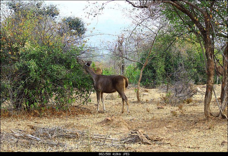 Fortuner Trail: Alwar, Bhangarh & Sariska-img_0372.jpg