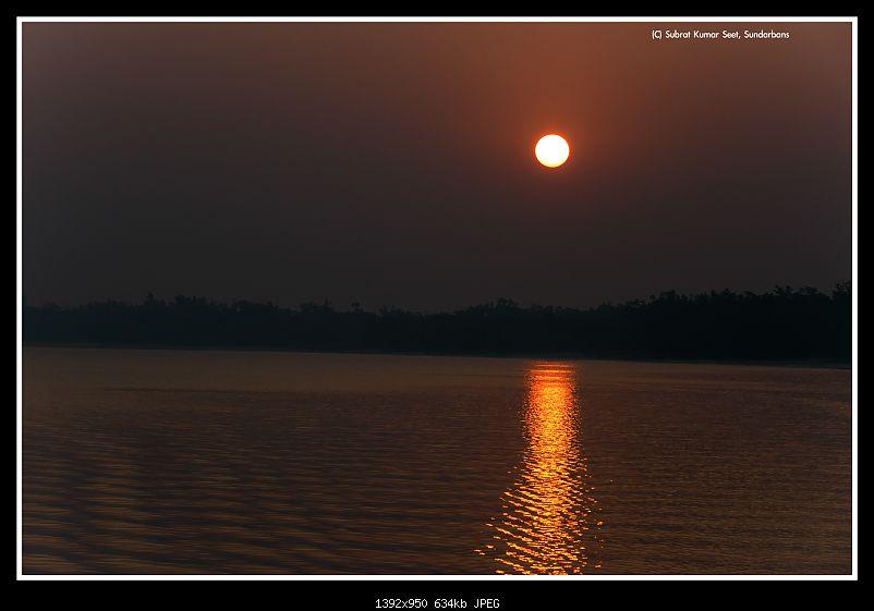 In search of the Legendary Swamp Tiger - Sundarbans Tiger Reserve-morningstr_43a4050.jpg