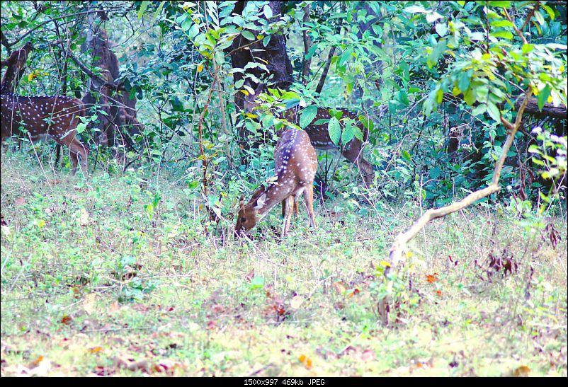 A Junglee prelude to a Sunny New Year - Dandeli & Goa-dsc02183.jpg