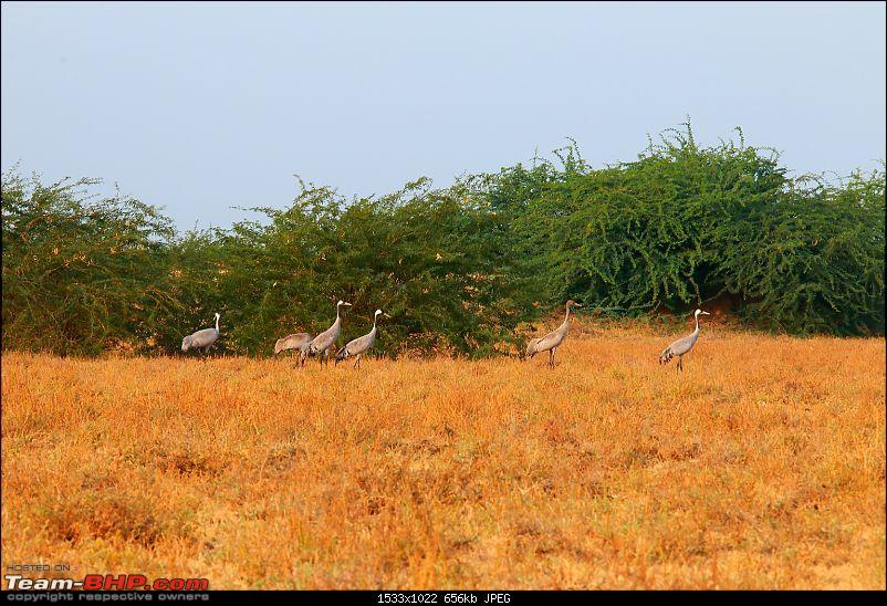 Kutch Expedition with a Mahindra Logan-birds-1.jpg