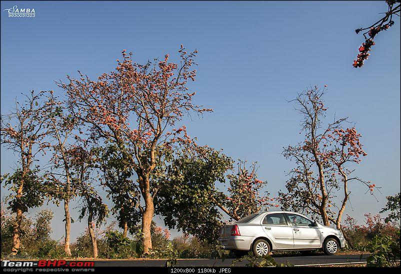 West Bengal - A treasure for tourists-img_6318.jpg